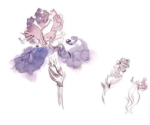 Sketchbook #114: Iris Garden