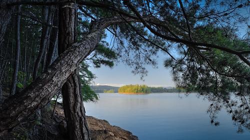 canon georgia nottelylake summer color landscape nature pinetrees tress water lake bark rocks