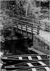 Le choix pour traverser la rivière