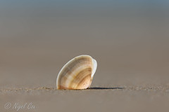 I see sea shells on the sea shore... by NikonNigel
