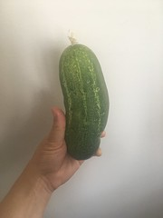 Cucumber that grew in High Garden!