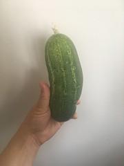 Cucumber that grew in High Garden!