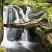 Approaching Stock Ghyll Falls