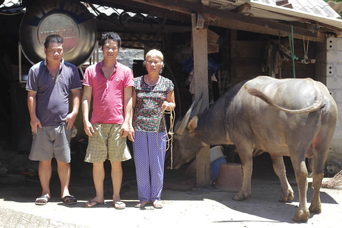 Mai Thi Loi, her sons, and their water buffalo August 2018