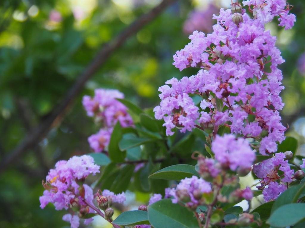 Растение - лиловое