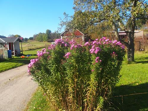 SÖ E37.2 Blomster