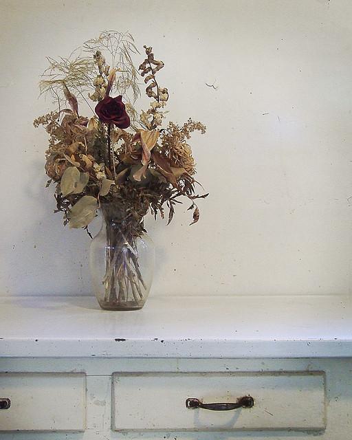 Dead Flowers (Explore 8/31/2018), Fujifilm FinePix S5200