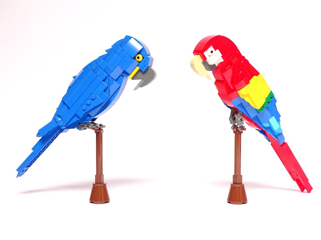 Hyacinth macaw (Anodorhynchus hyacinthinus), and Scarlet macaw (Ara macao)