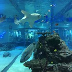 Aquarium at Rycom Mall