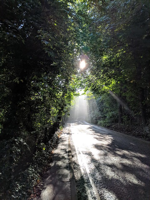 Sunlight through the Trees on Glenlockhart Road