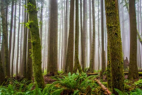 Oregon Coast 2018 -71