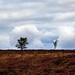 North York Moors National Park