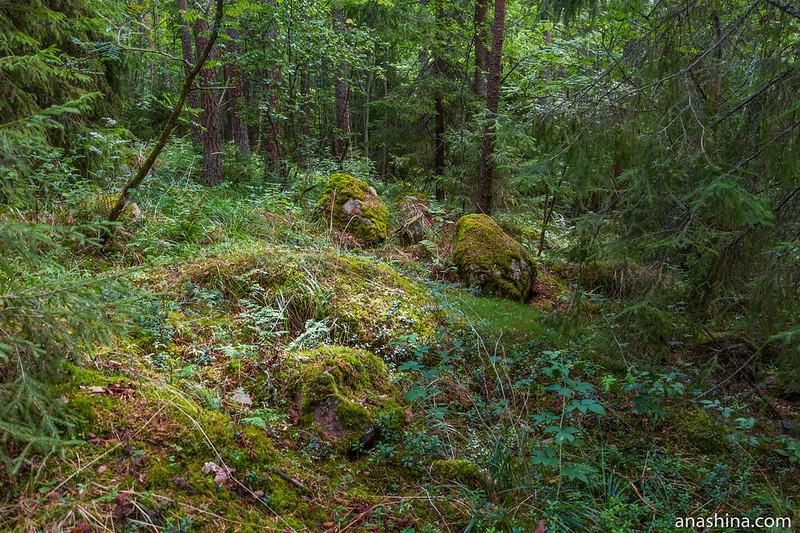 Северный лес, Карелия