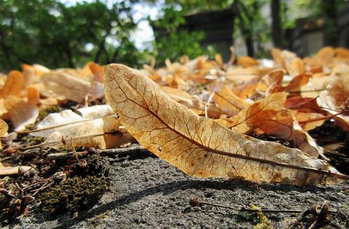 Fallen leaves on a grave - Explore!
