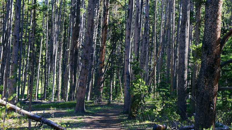 IMG_6910 Cascade Lake Trail