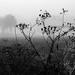 Im Nebel 04 sw