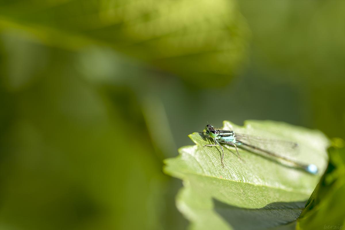 Macros/  proxi/  insectes  - Page 2 30805050278_993ba4b991_o