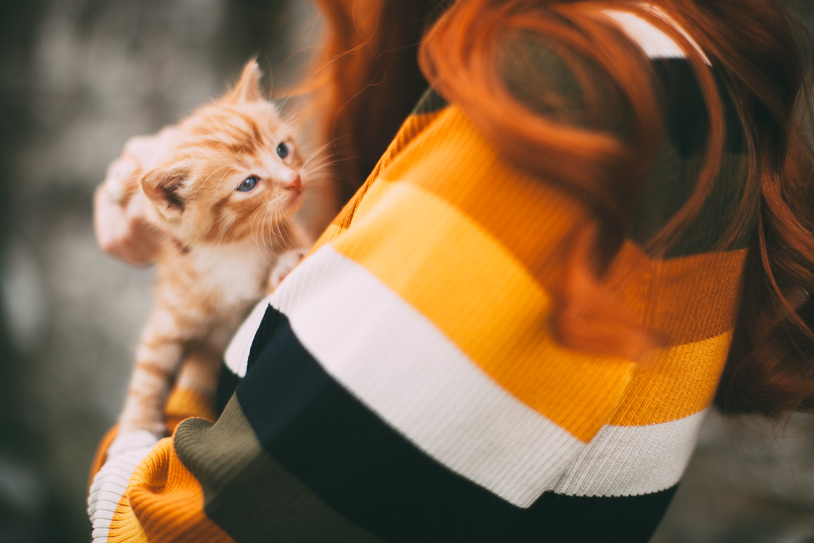 ginger kitten-11