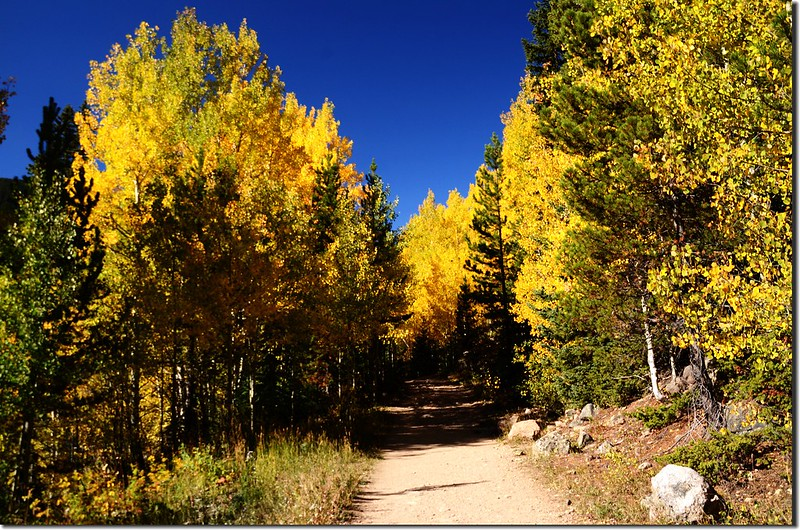 Fall colors at E. Portal trailhead, Colorado (13)