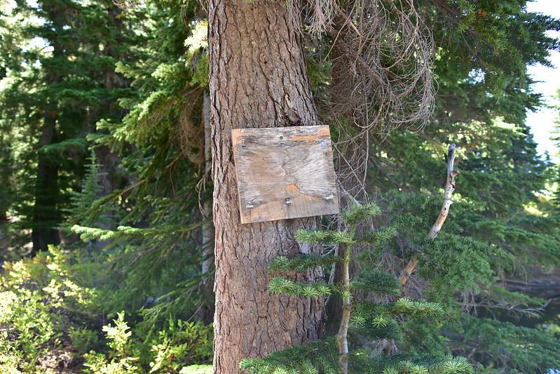 Sugar Pine Ridge Trail