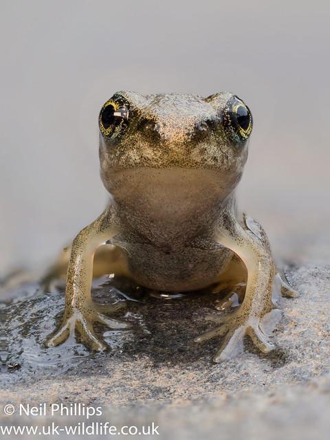 Froglet stack