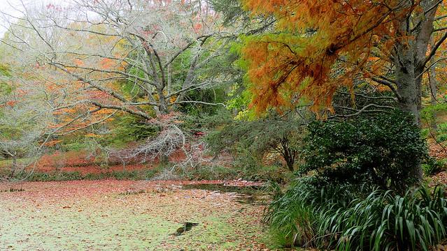 Eastwardhill Arboretum