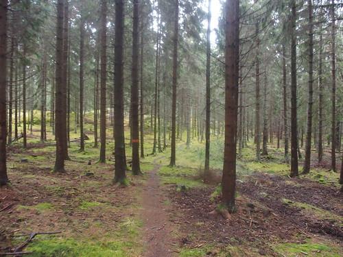 SÖ E58 Glesa skogen