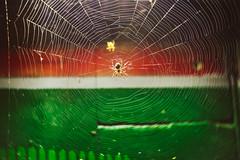 Spider #232/365