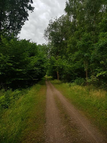 20180624 20 186 Baltica Wald Weg