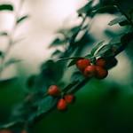 2018:09:23 14:20:46 - Fruit Garden Bokeh - Tarbek - Schleswig-Holstein - Germany