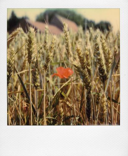 Dans les champs ...