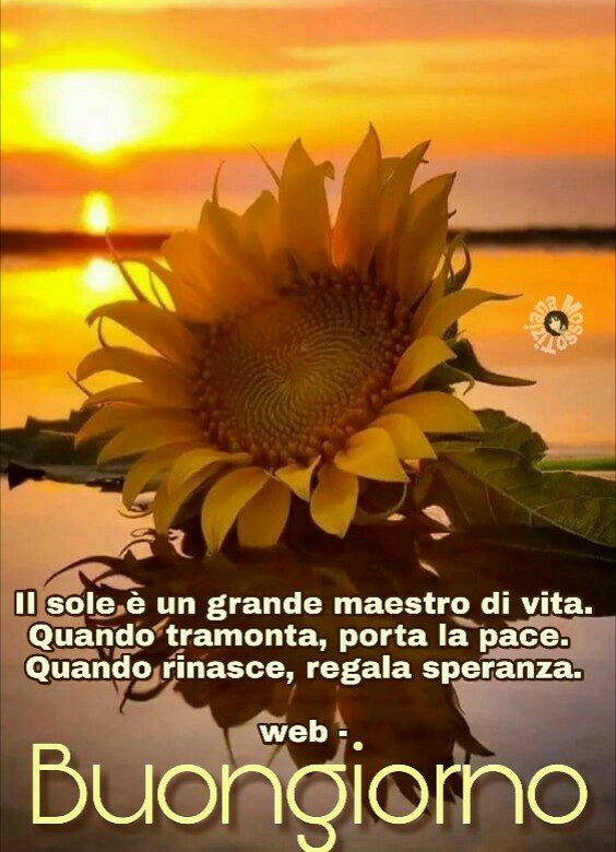 Buongiorno Link Page Facebook Tiziana Mosso Aforism Flickr