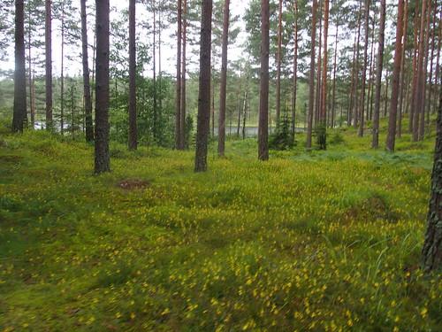 SÖ E35 Skogen