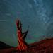 Perseid Meteor Shower in Red & Green by Jeffrey Sullivan