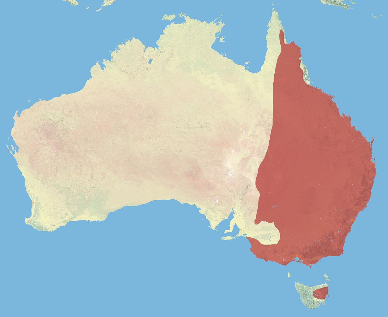 Range of the eastern grey kangaroo
