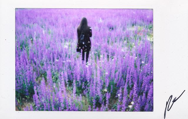 """Fujitivas_65 """" Purple Spring """""""