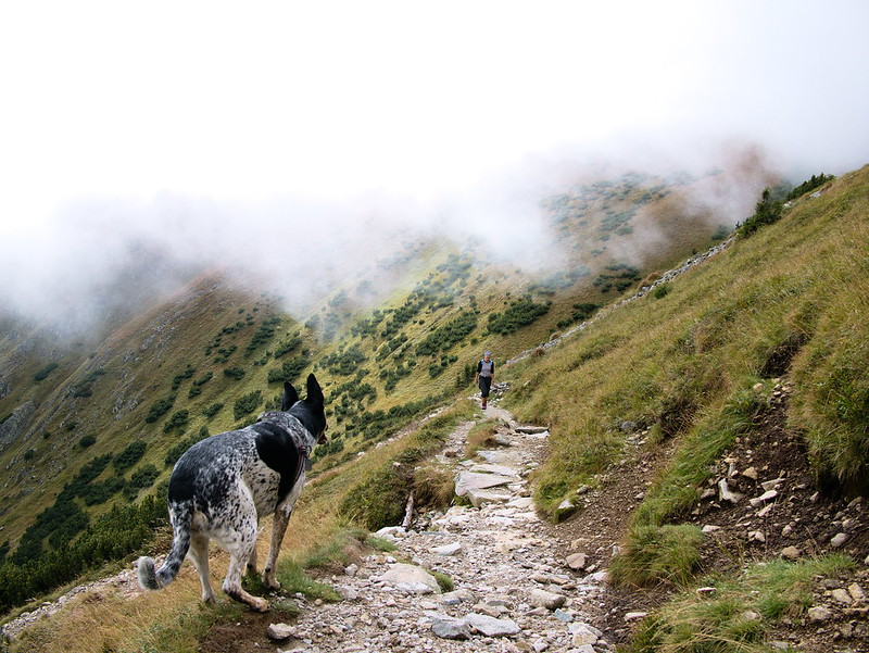 pies niżne tatry