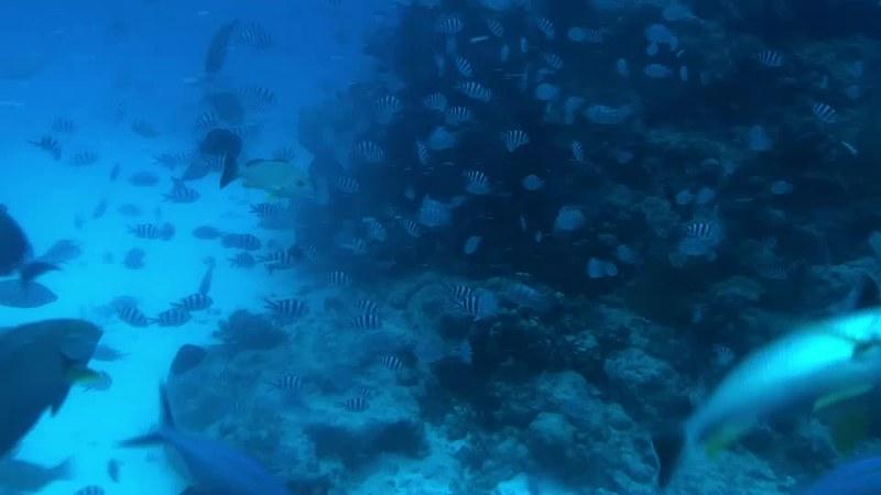 潛水艇 (1)