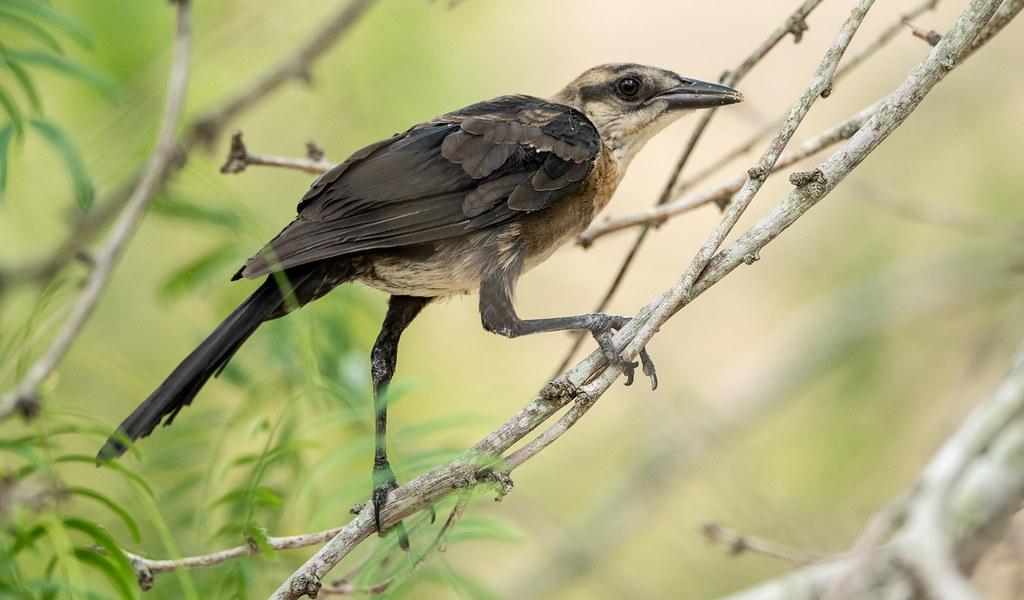 Bird_75