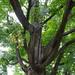 Tree-19934
