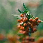 2018:09:23 14:21:31 - Fruit Garden Bokeh - Tarbek - Schleswig-Holstein - Germany