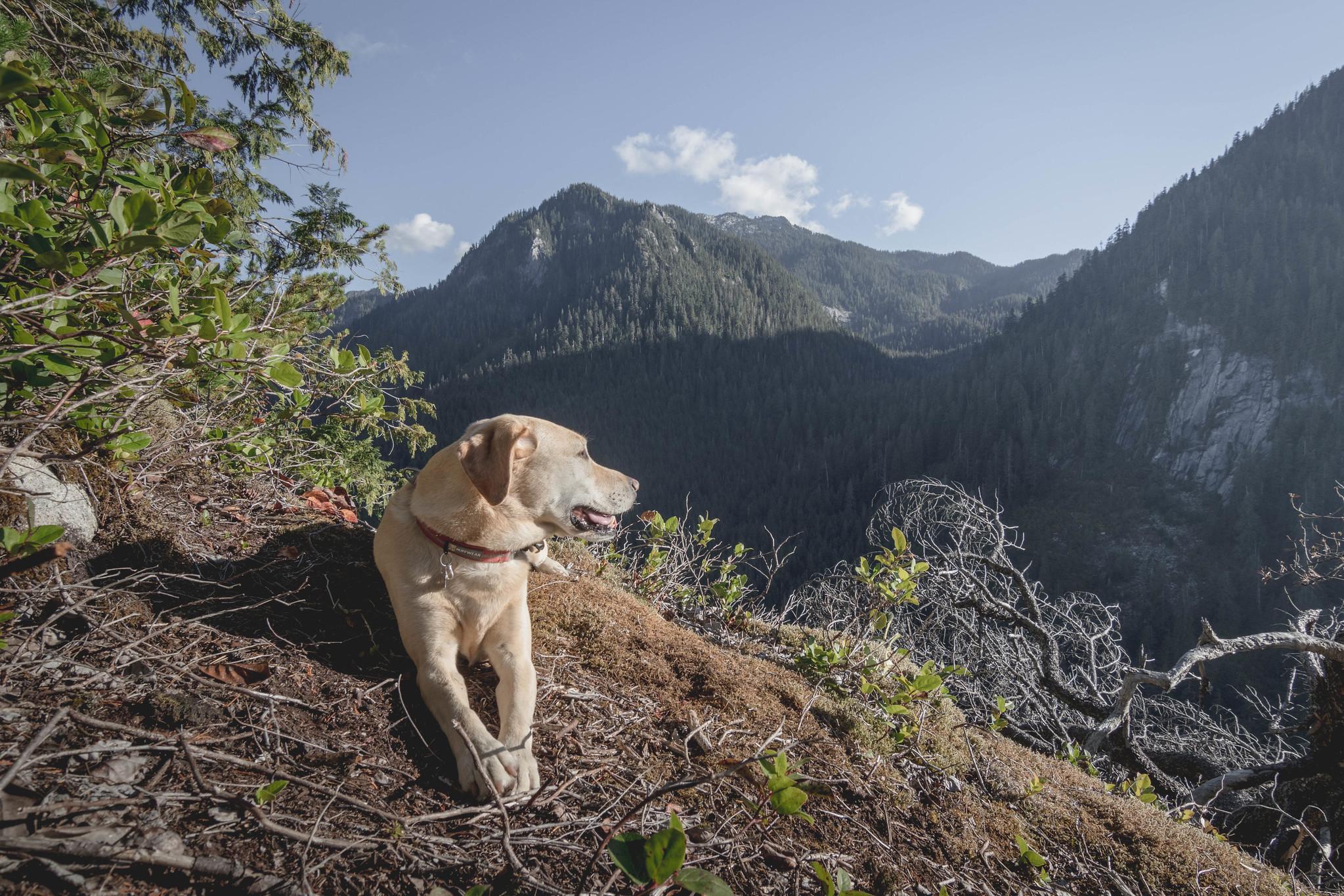 Summit dogs on Stegosaurus Butte