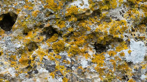 Lichen, King Stone, Rollright Stones