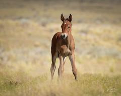 2018 Aug 26 Wild Horses