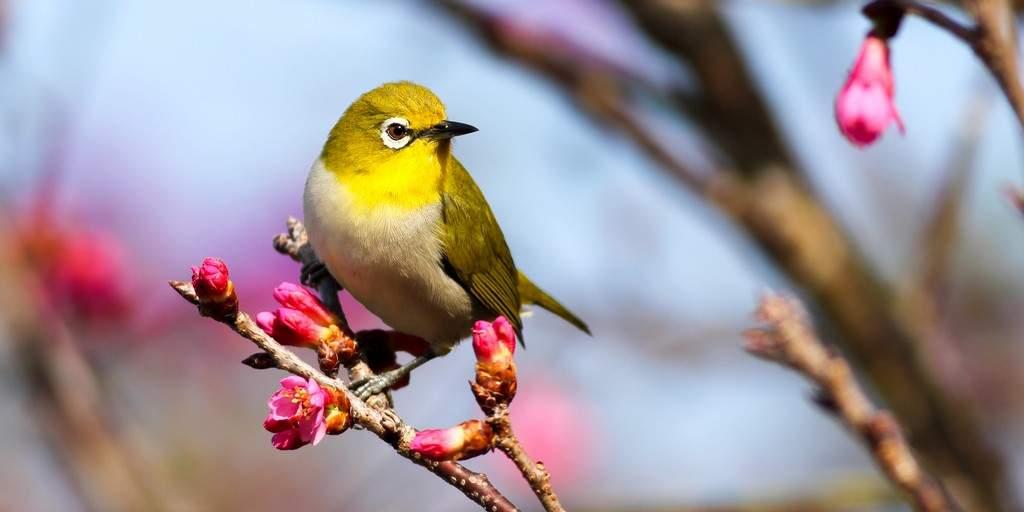 villes-oiseaux-pollution-sonore