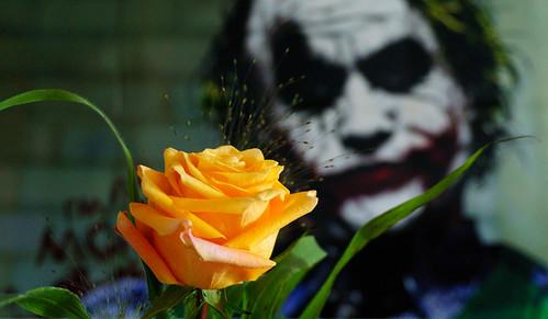 Beautiful rose Hahahehehohoo