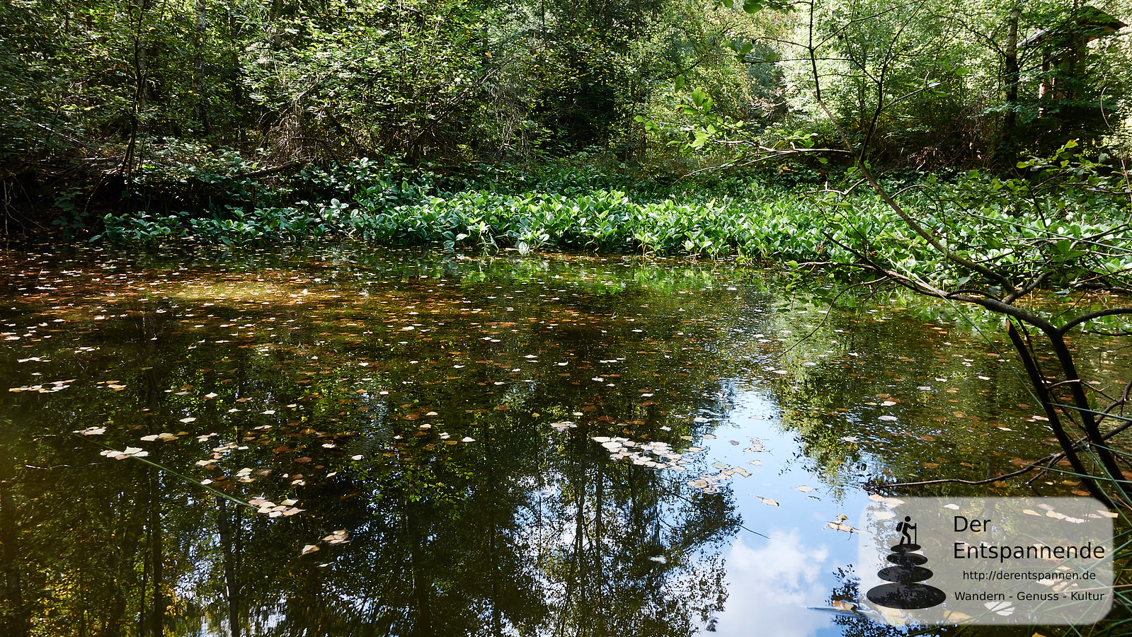 Biotop im Binger Wald