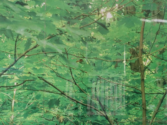 "Detail of ""Green Maples"", John Packman #toronto #yongeandbloor #publicart #yongestreet #greenmaples #johnpackman #murals #photomural #photos #aluminum #green #mapleleaf #trees"