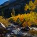 Fall Beginning Bishop Ck  8690 by bkies1