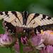 146/365 - Wabi sabi butterfly